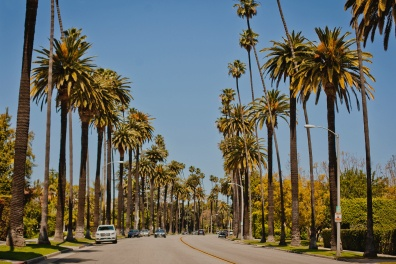 Beverly Hills street lined with palm trees